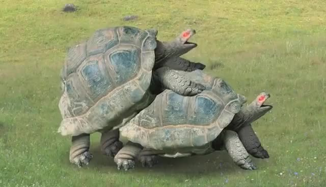 Watch Turtle seks GIF on Gfycat. Discover more turtle seks GIFs on Gfycat
