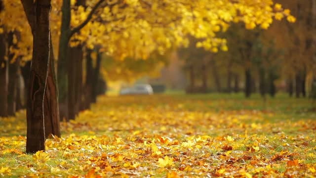 Watch and share Fall Background Video GIFs on Gfycat