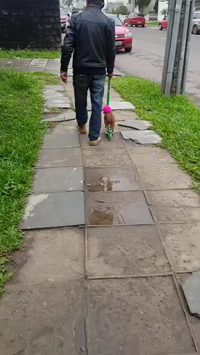 Watch and share Scooter GIFs and Dog GIFs by Ah Negão on Gfycat