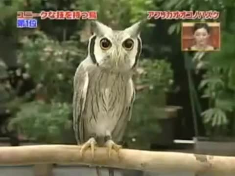 Watch Transformer Owl GIF on Gfycat. Discover more funny, gifs, transformer owl GIFs on Gfycat