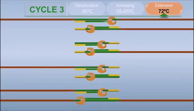 Watch and share PCR - Polymerase Chain Reaction (IQOG-CSIC) GIFs on Gfycat