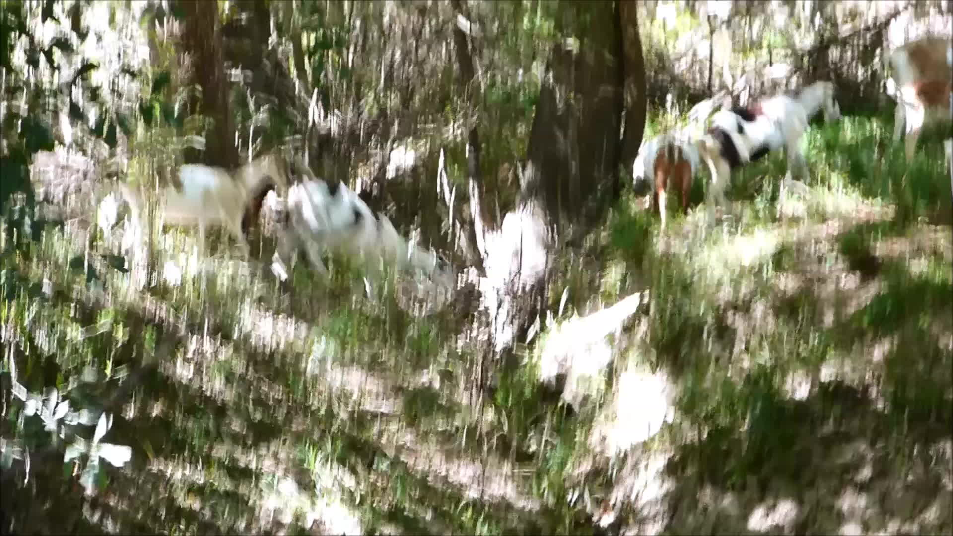 Goatparkour, goats, jump, knsfarm, Making the Jump GIFs