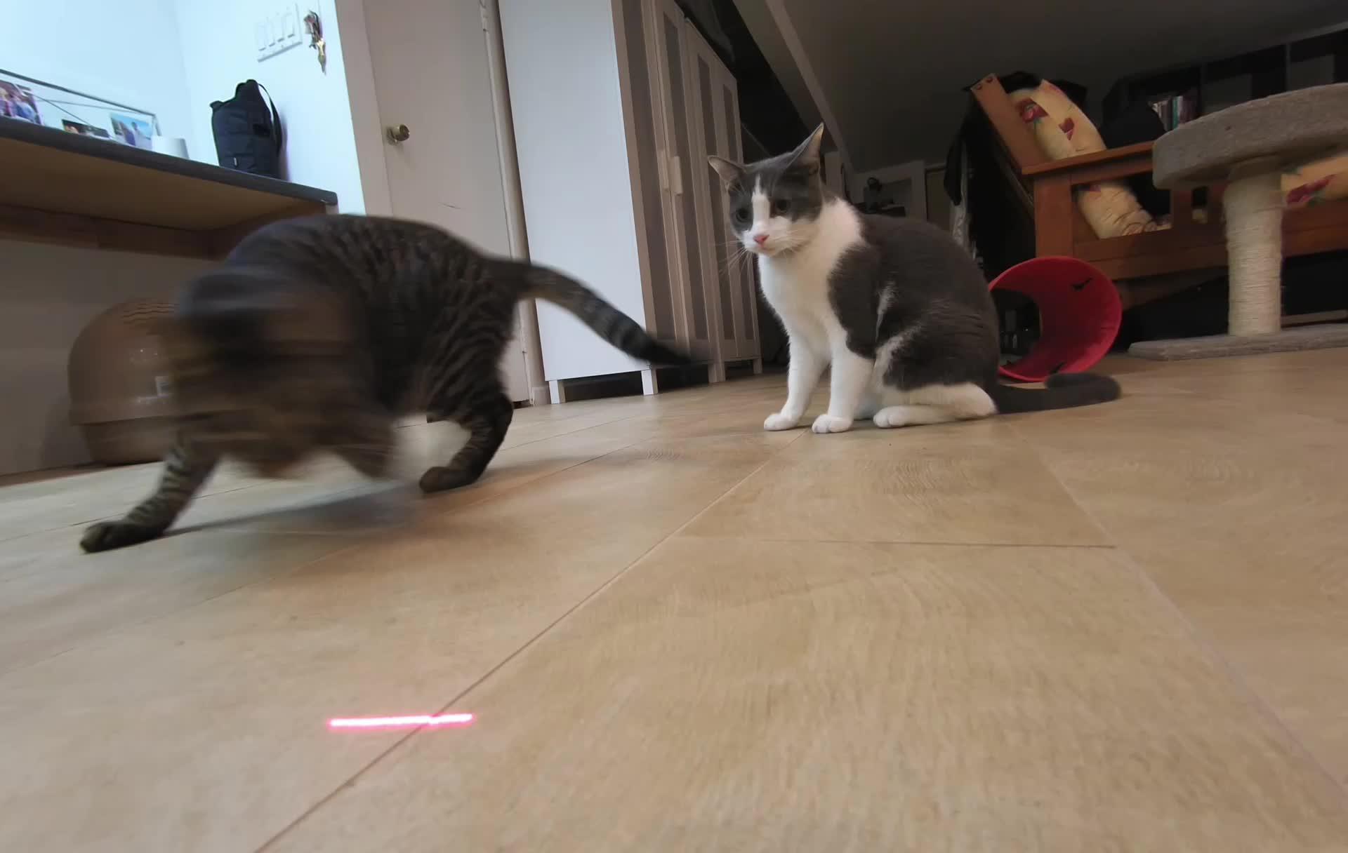 Google Clips - Laser Cat GIFs