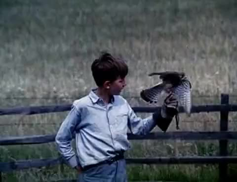 Watch and share Kes GIFs on Gfycat