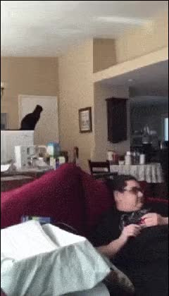 Watch and share Animalfails GIFs and Cat GIFs by Elaine Cheng on Gfycat