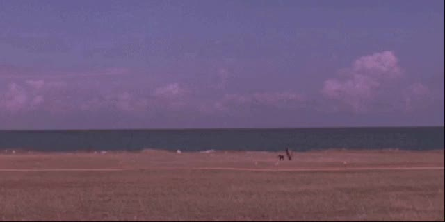 Watch Nope GIF on Gfycat. Discover more related GIFs on Gfycat