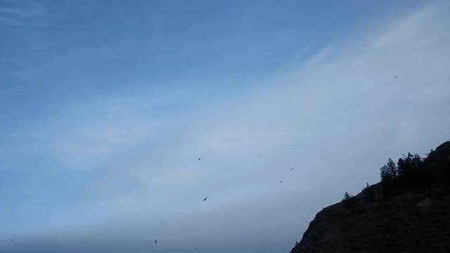Watch and share Fly Like An Eagle GIFs on Gfycat