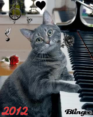 Watch and share Cat Playing Piano GIFs on Gfycat