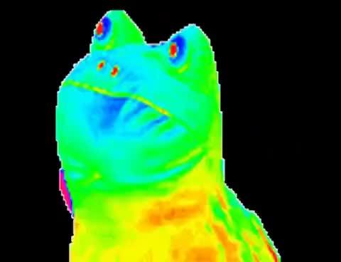 Watch and share Rainbow Frog Gif GIFs on Gfycat
