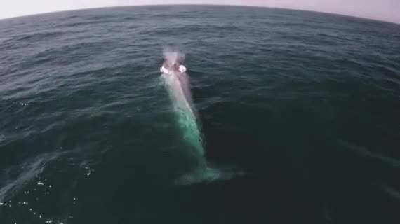 Watch and share Blue Whale Interrupts TV Presenter At Exactly The Right Moment | The Huffington Post GIFs on Gfycat