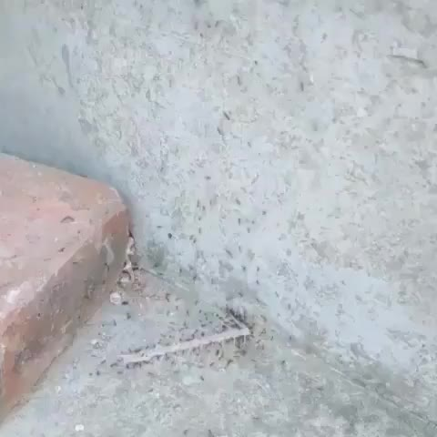 ants, bugs, insects, Ant power GIFs