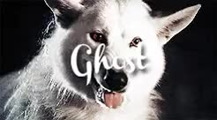 Watch and share Summer The Direwolf GIFs and Ghost The Direwolf GIFs on Gfycat
