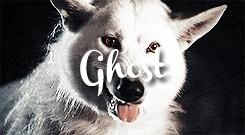 asoiaf, asoiafedit, by claire, direwolves, ghost the direwolf, gif, gotedit, grey wind the direwolf, house stark, lady the direwolf, nymeria the direwolf, original, shaggydog the direwolf, summer the direwolf, ASOIAF GIFs
