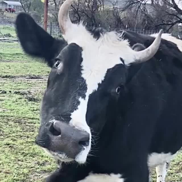 Watch and share Farm Animal Refuge GIFs and Happygirl GIFs on Gfycat