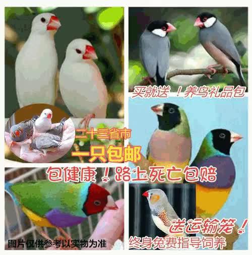 Watch and share 出售假币Telegram:【@wijth】 GIFs by ▇Telegram:@wijth▇▇▇▇▇▇▇▇▇▇▇▇▇▇ on Gfycat