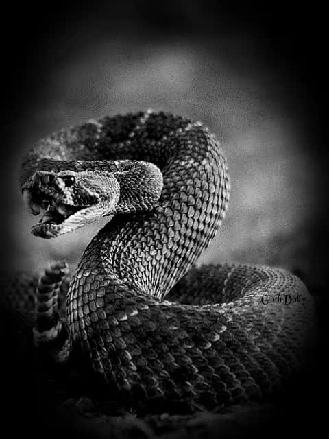 Watch and share Rattlesnake GIFs and Animation GIFs on Gfycat