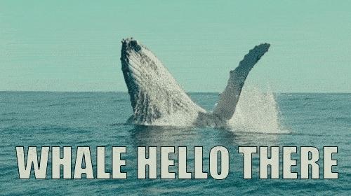 Hello, Hey, Hi, Waving, Whale, Whale Hello There GIFs