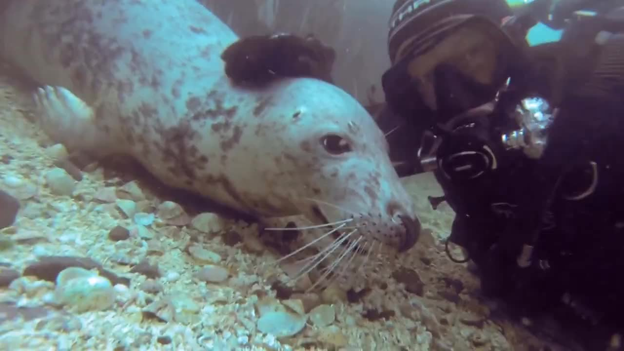 Rad, gopro, stoked, GoPro: Seal Belly Rub GIFs