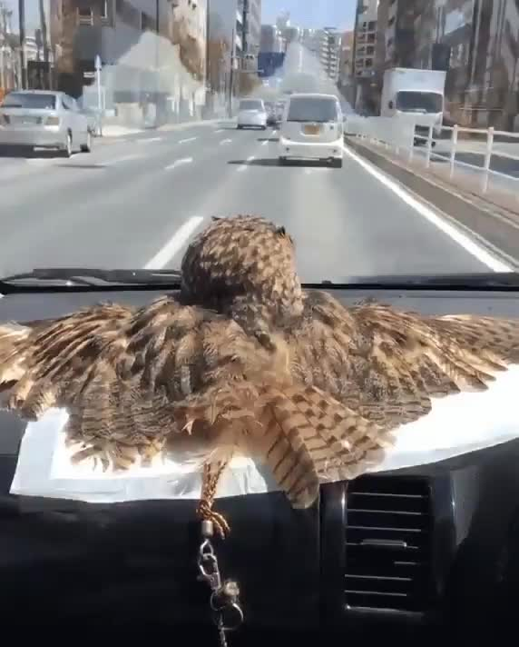 Watch and share Bird GIFs and Owl GIFs by Boojibs on Gfycat