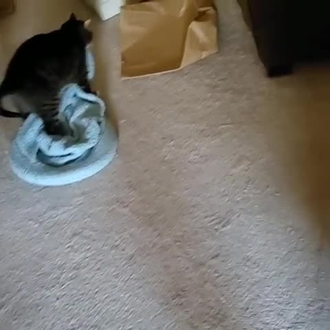 cat, cats, funny, Busted! GIFs
