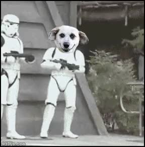 Watch Starwars GIF on Gfycat. Discover more dog GIFs on Gfycat