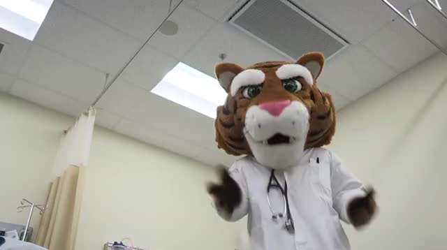 Tiger mascot looking horrified at floor after dropping