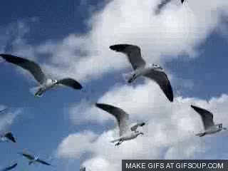 Watch and share Seagulls Flying GIFs on Gfycat