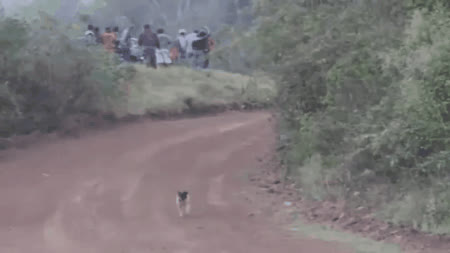 nonononoyes, Run, doggo, run! GIFs
