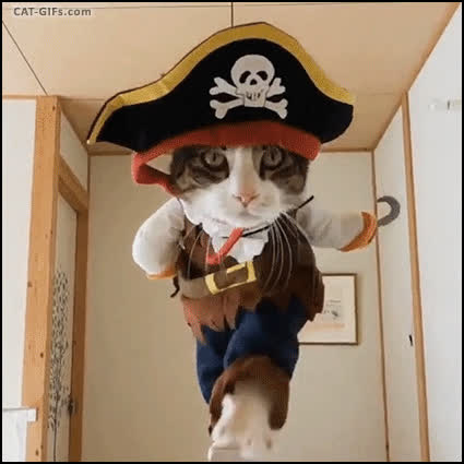 af7d2717018 CAT Funny pirate Cat wearing his new Captain Hook Costume haha he is so  amazing GIF