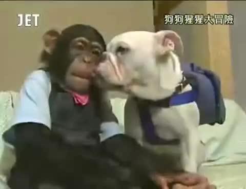 Watch and share Chimpanzee GIFs and Icecream GIFs on Gfycat
