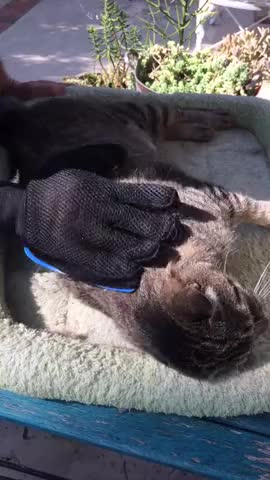 Watch and share Pet Brush GIFs by Viral Content Maker on Gfycat