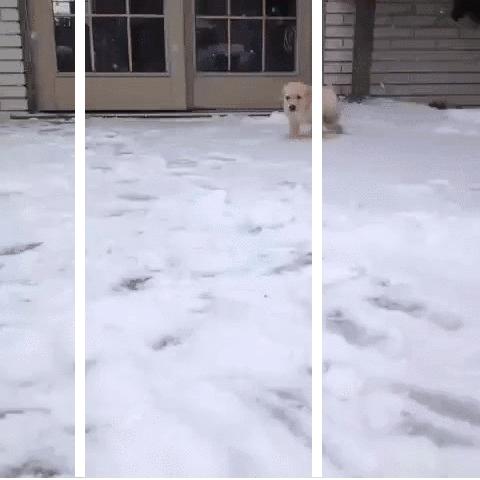 splitdepthgifs, Snow Puppy GIFs