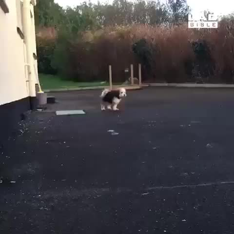 Watch Tippy taps and boingies GIF on Gfycat. Discover more SadPandasNeedHugs GIFs on Gfycat