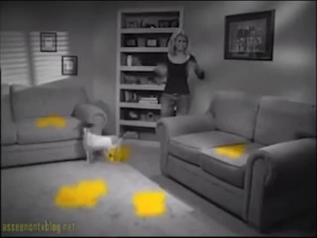 Watch and share Infomercial GIFs and Urine Gone GIFs by Jon Maksin on Gfycat