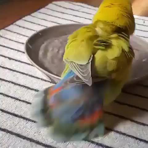 Watch and share Bath GIFs and Bird GIFs by Nomorefoxgiven on Gfycat