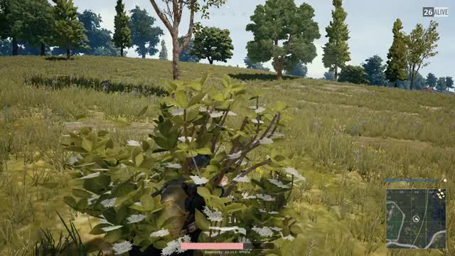 Watch and share Crossbow From Bush GIFs by draqen on Gfycat