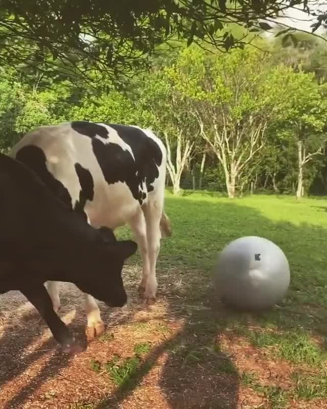 Watch and share Playing With A Ball GIFs and Play Ball GIFs by lnfinity on Gfycat