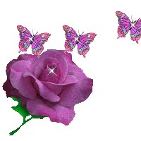 Watch and share Purple Rose With Purple Butterflies animated stickers on Gfycat