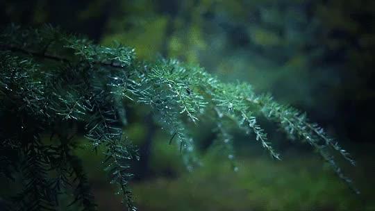 Watch and share Midnight Rain GIFs on Gfycat