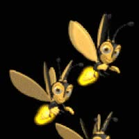 Watch and share Insect GIFs on Gfycat