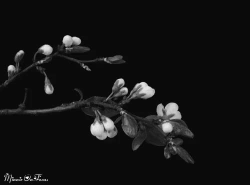 Watch Spring Blossoms GIF on Gfycat. Discover more related GIFs on Gfycat