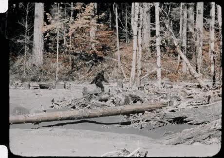 OldSchoolCool, gifs, joerogan, The 1967 Bigfoot footage stabilized. GIFs