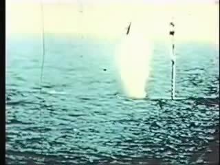missilegfys, Trident SLBM failure to fire. (reddit) GIFs