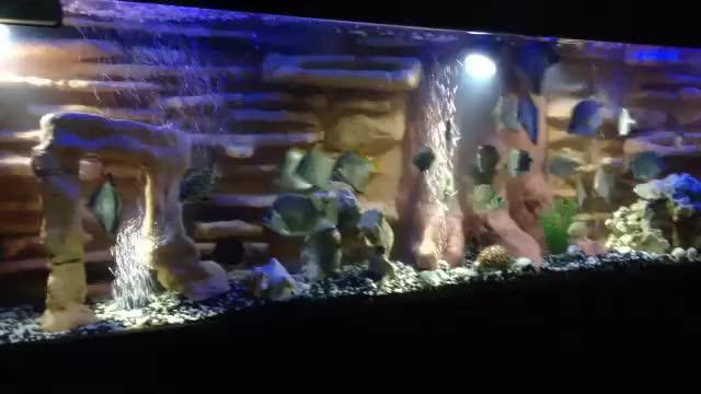 Watch and share DIY Aquarium GIFs on Gfycat