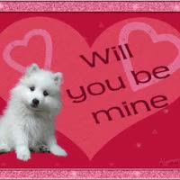 Watch and share Valentine White Dog Asks - Will You Be Mine? GIFs on Gfycat