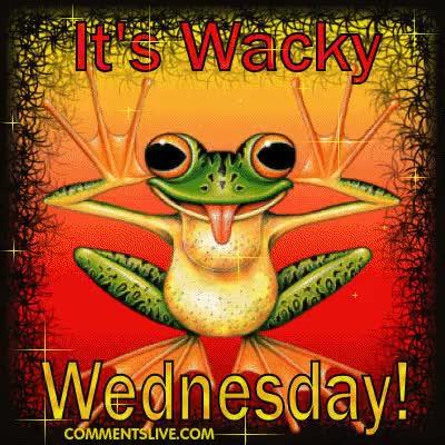 Watch and share Wacky Wednesday GIFs on Gfycat