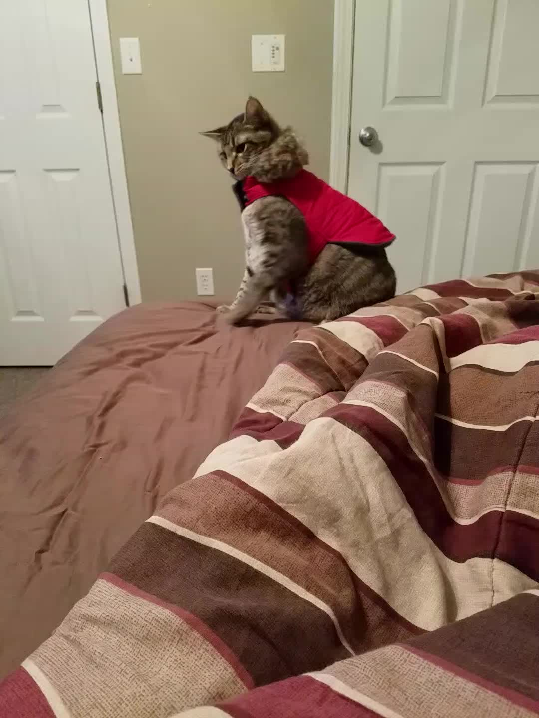 cats, funny, thecatdimension,  GIFs