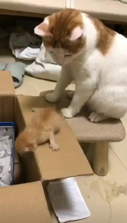 cat, kitten, Momma Cat Doesn't Have Time For This GIFs