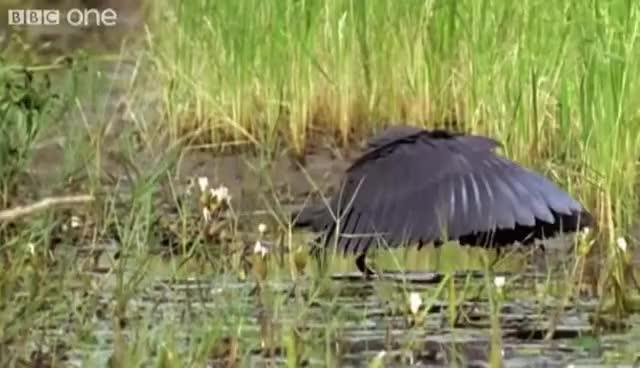 Watch and share Bird GIFs on Gfycat