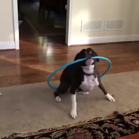 Watch the best hula hooper of all time. GIF by PM_ME_STEAM_K3YS (@pmmesteamk3ys) on Gfycat. Discover more related GIFs on Gfycat
